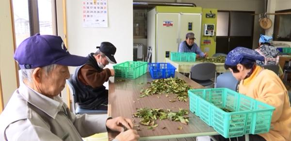 ゆき作業所で行われている お茶の葉の加工のようす